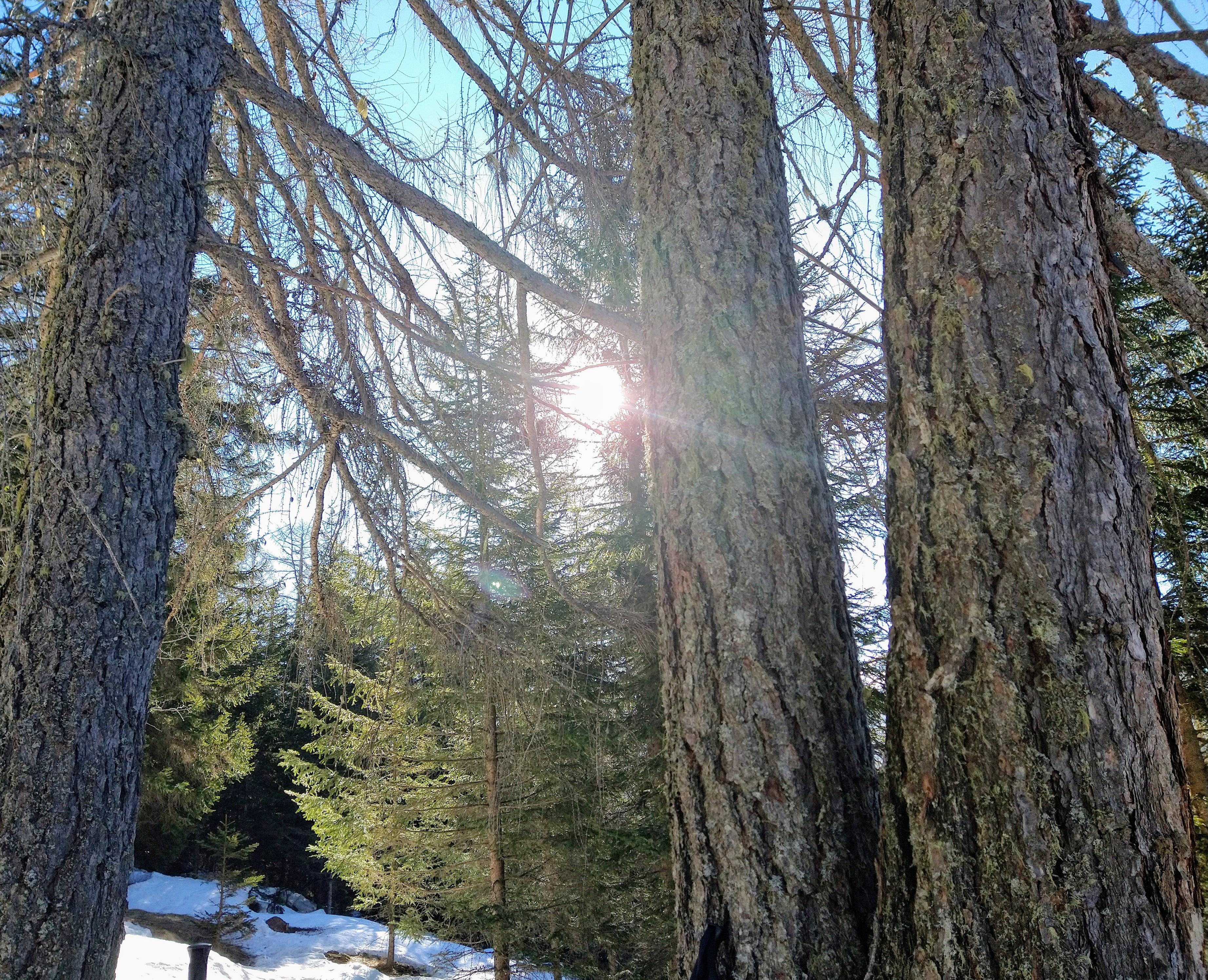 3 marzo 2021: Giornata Mondiale della Natura
